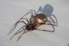 sark-spider-lr