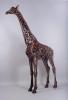 hammer-horn-giraffe-2-lr