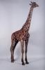 hammer-horn-giraffe-3-l-r