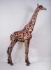 hammer-horn-giraffe-lr