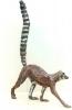 rt-lemur-1-lr
