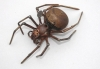 bicycle-bell-spider-011-copy