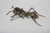 door-knob-ant-14-copy