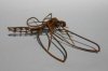 dragonfly2_low_res