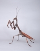 nutcracker-praying-mantis-1
