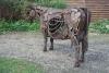 Irish-Cow-078-Copy