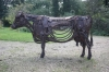 irish-cow-057-copy