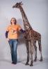 giraffe-and-harriet-lr
