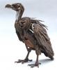 vulture-copy