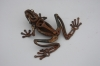 bottle-opener-tree-frog-lr10