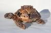 trowel-tortoise25-copy