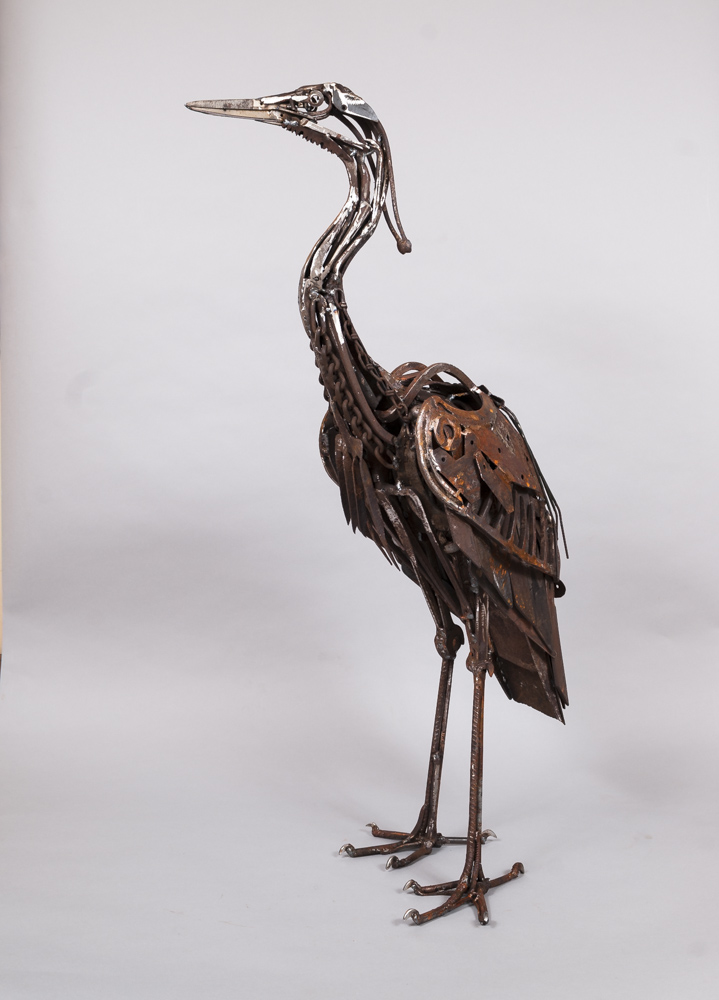 Fork Fronted Heron-5