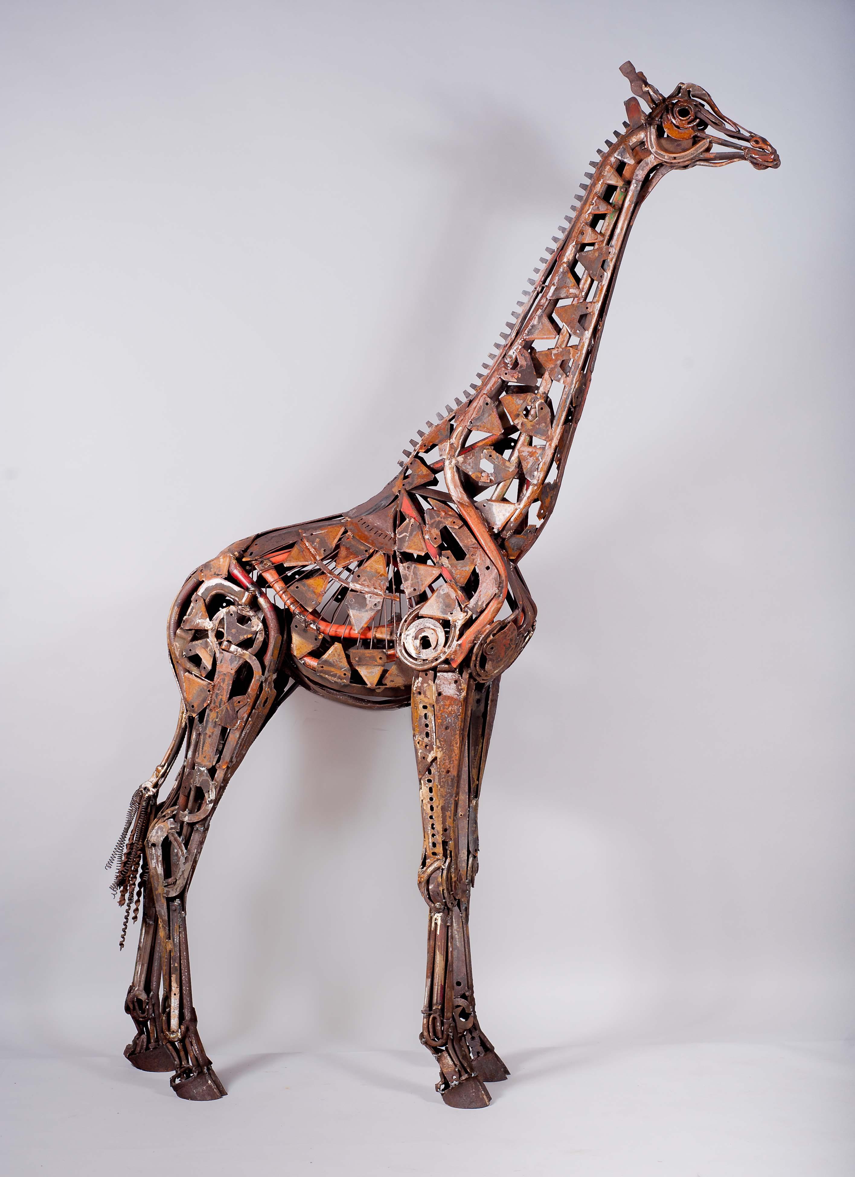 Hammer Horn Giraffe LR