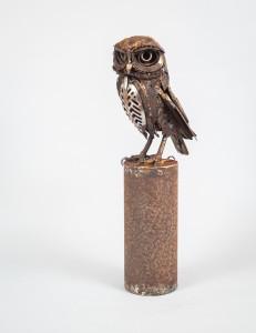 Spoon Little Owl