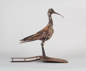 Forceps Curlew